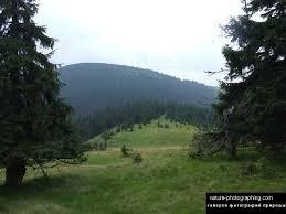 Фото карпаты и крымские горы реферат растения карпатских гор В  В горах Карпаты