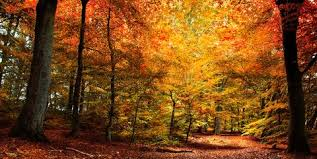 55 Best Fall Quotes 2021 - Inspiring Sayings About Autumn
