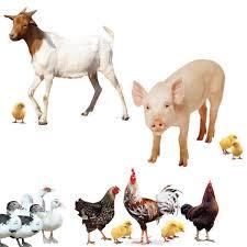 farm animals pictures. Exellent Pictures Farm Animals On Pictures I