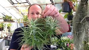 easy to grow air plants my air plant tillandsia collection care tips and tricks for happy plants you