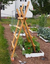 Planting for the trellis  - Page 2 Images?q=tbn:ANd9GcQ4Rv06t-76FCh2kpMOuLNUOeP5SQ-rhH4iR_e9RVO8V5awaIFS9Q