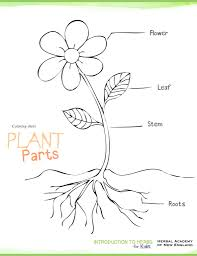 Small Picture Download Plant Parts Coloring Pages and activities Herbs for