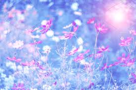 Image result for pink and blue flowers