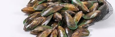 wild new zealand mussels