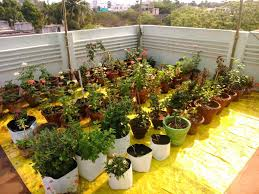 Terrace Kitchen Garden Roof Terrace Kitchen Garden At Low Budget In Chennai Chennai