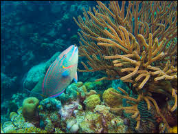 The Great Barrier Reef Is In Serious Trouble These Fish Can