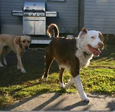 mr artie was abandoned and found himself at the jefferson parish shelter he was rescued to a foster home a few weeks ago
