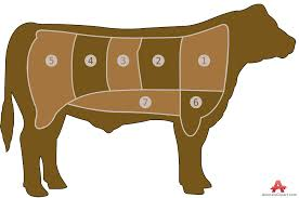 beef cow outline. Brilliant Outline For Beef Cow Outline C