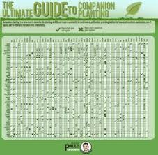 the ultimate guide to panion planting infographic key plants repel insects