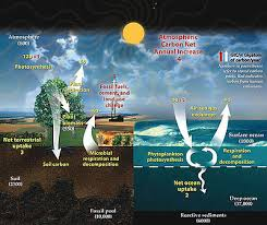 Carbon Cycle Flow Chart Carbon Cycle Wikipedia