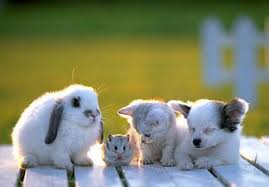 kittens and puppies and bunnies and hamsters and monkeys. Contemporary And Bunny Hamster Kitty Puppy Pals Intended Kittens And Puppies Bunnies Hamsters Monkeys
