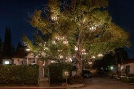 the chandelier tree courtesy of adam tenenbaum