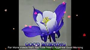 good morning flowers for you good morning wishes greetings sms sayings es e card whatsapp video you