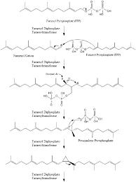 Cholesterol Lowering Foods Chart Pdf Cholesterol Wikipedia