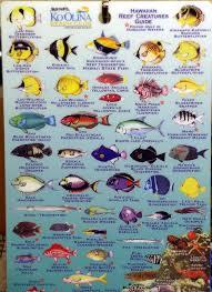 Oahu Fish Chart Oahu Hawaii Vacation Photos Page 5 Of 9 West Shore