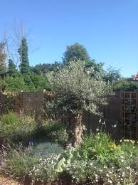 Small Picture 82 best Garden design and build service images on Pinterest