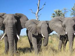 about elephants i write about elephants i write about other heart break
