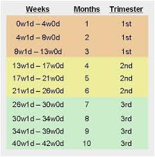 Skillful Baby Trimesters Chart Pregnancy Weeks Months
