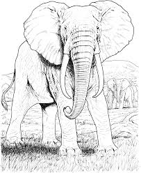 Small Picture Elephant Mandala Coloring Pages Adult Color Pages Stress Relief On