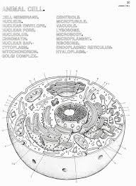 Animal Cell Coloring Sheet Plant And Animal Cell Coloring Pages