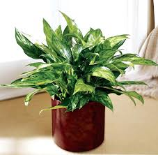 awesome the best indoor plants for low light for ac this is one of the best
