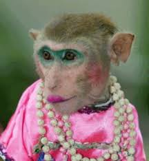 picture of monkey with makeup beauty fzl99