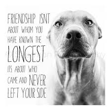 Quotes About Pets And Friendship Best Inspirational Quotes About Strength A True Friend Has Four Legs And