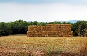 dry grass field background. Free Images : Landscape, Nature, Sky, Field, Farm, Prairie, Rustic, Hut, Dry, Crop, Pasture, Fire, Soil, Agriculture, Haystack, Straw Bale, Fields, Dry Grass Field Background P