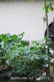 how to build a trellis raised urban garden