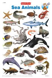 Water Animals Name Picture A Selection Of Pins About Animals