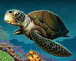 pictures of turtles to print. Interesting Print Sea Turtle Art Print On Pictures Of Turtles To Print T