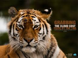 Grabbing The Cloud Cost Tiger By The Tail