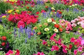 flowers for garden. Summer Garden Flowers Charming Flower Art Decorating Clear Melbourne . For