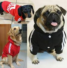 Special Offers dog clothes winter pug ...