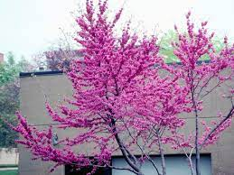 27 flowering trees for year round color