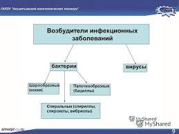 Презентация на тему РЕФЕРАТ Тема Влияние химических и  9