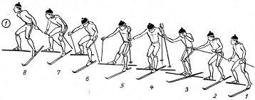 Виды ходов на лыжах для уроков по лыжной подготовке Структура движений одновременного двухшажного хода при преодолении подъемов