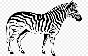 coloring book zebra drawing stripe zebra