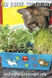 how to make an indoor cat garden mypetmystar