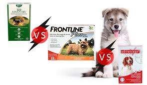 frontline plus vs advantix. Modren Frontline K9 Advantix Vs Frontline Plus Advantage Make A Better Choice This Summer Intended V