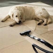 Leckere lollis leckt ludwig leckermann aus leck am neck. Die 10 Grossten Erziehungsfehler Beim Hund Und Wie Man Sie Vermeidet
