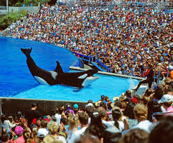 pink seaworld battle over whale captivity