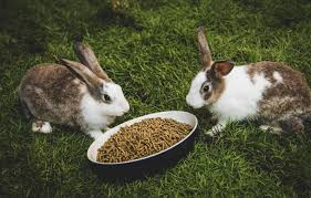 5 foods you shouldn t give your rabbit