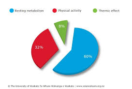 Energy Expenditure Chart For Activity Total Daily Energy Expenditure Science Learning Hub