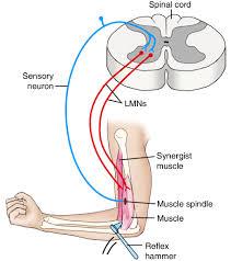Αποτέλεσμα εικόνας για muscle memory