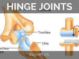 hinge joint examples. 6. hinge joint examples i