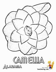 Here is a simple drawings of. Magnificent States Flower Coloring Sheets A G Alabama Georgia Free