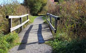 water nature grass boardwalk wood trail bridge sidewalk crossing walkway web autumn backyard garden waterway transition