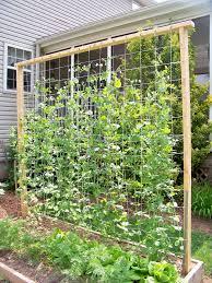 Small Picture Download Ideas For Trellis In Garden Solidaria Garden