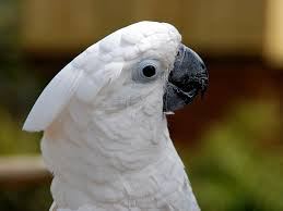 Pet Bird Noise 101